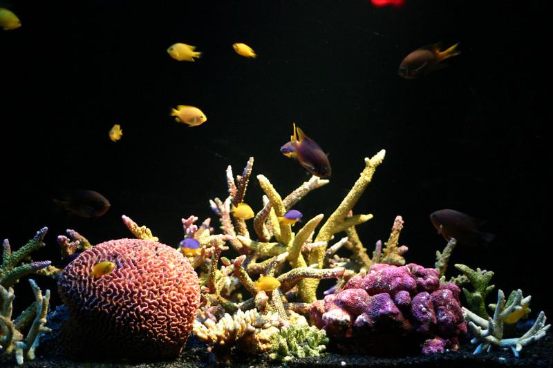 오션월드의 물고기들