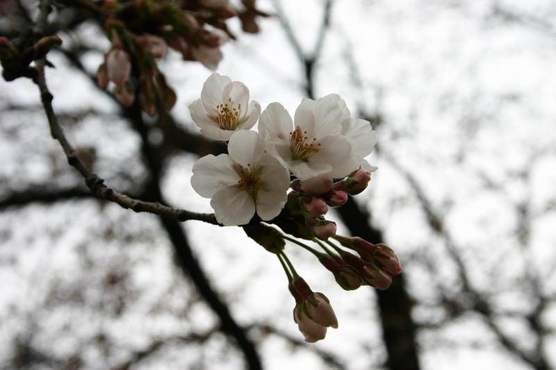 또 봄은 왔다